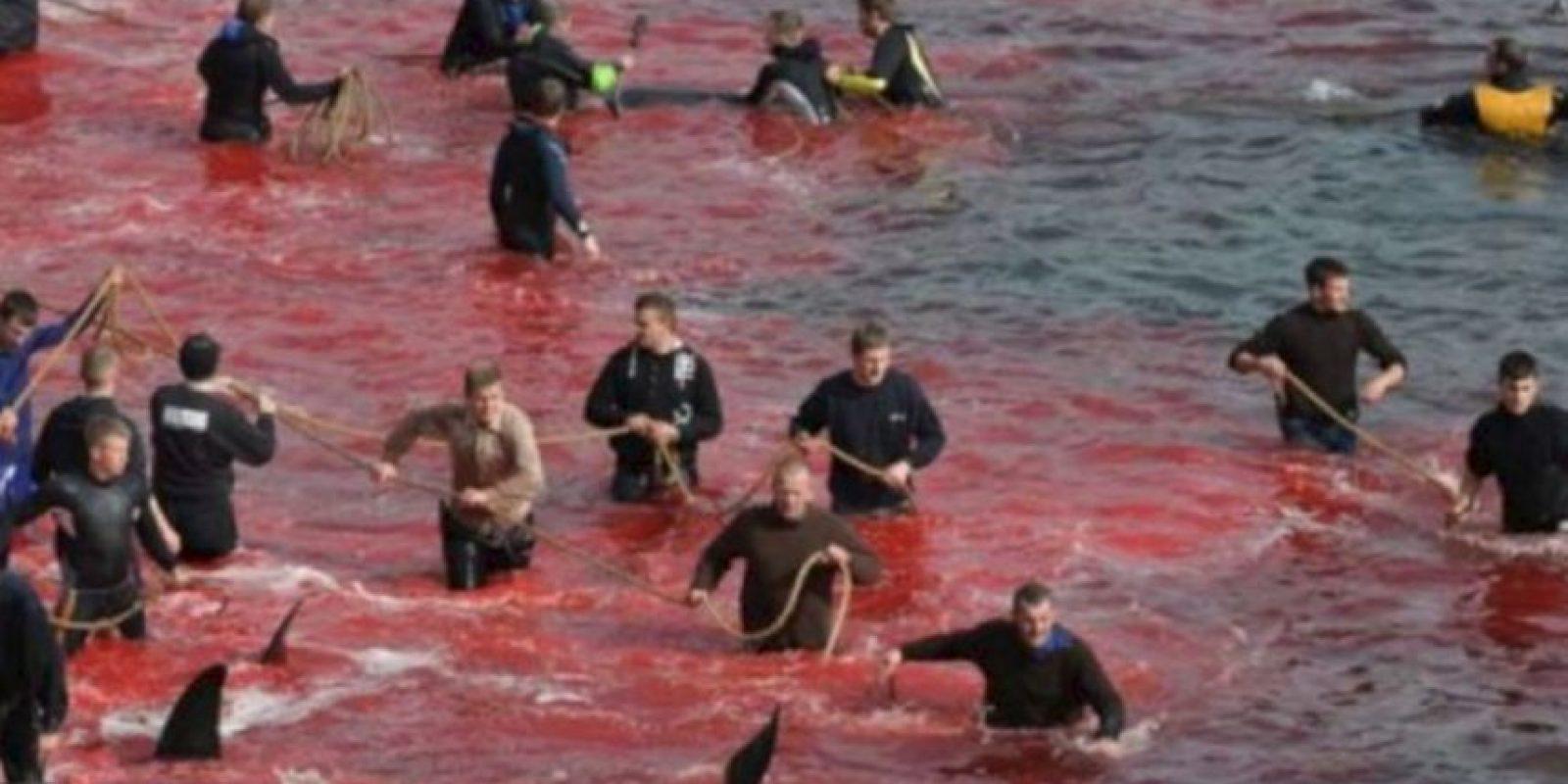 Atrapan ballenas para apuñalarlas en la costa. Participan niños. Foto:vía Sea Shepherds