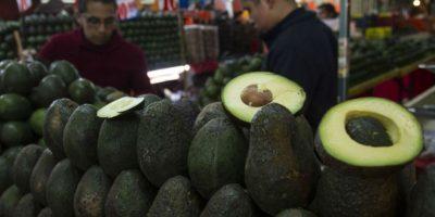 Los productores de aguacate podrán exportar sin necesidad de afiliarse a la APEAM Foto:Cuartoscuro