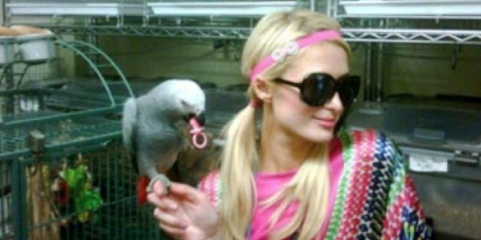 Paris Hilton tiene tantos animales que les creó una casa especial dentro de una de sus residencias en Estados Unidos. Foto:Vía Instagram