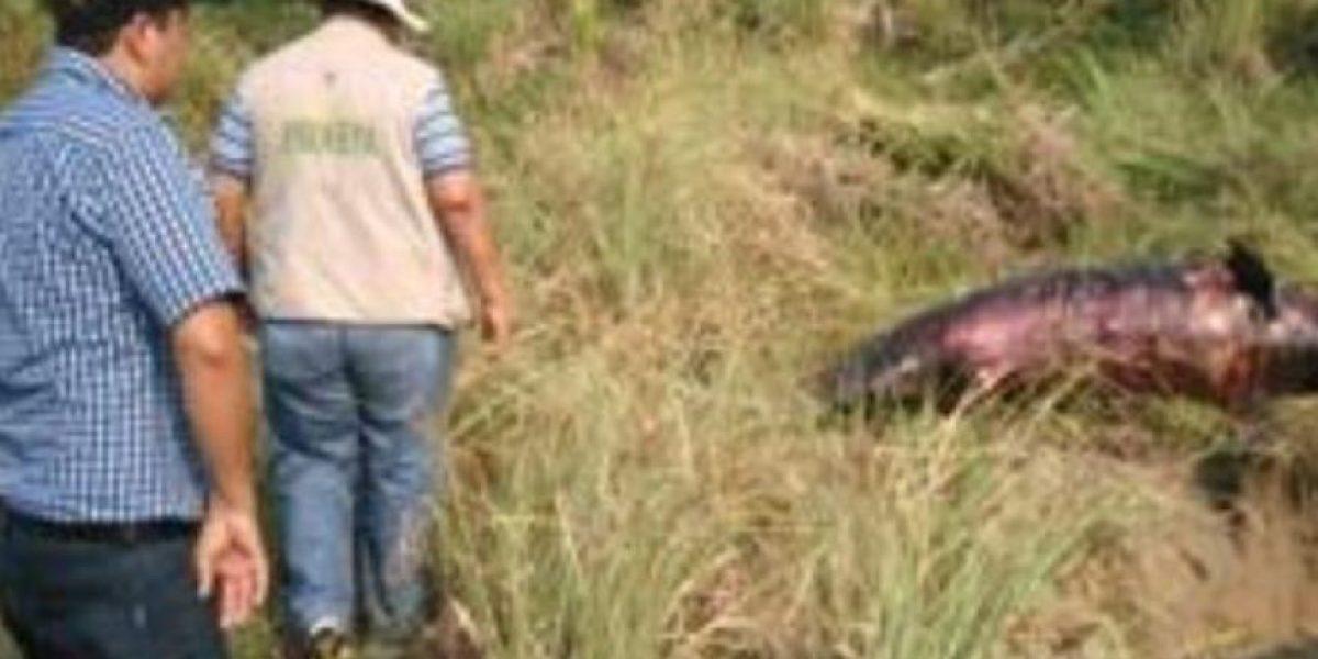 Hallan delfín muerto varado en Playa Caracol de Tabasco