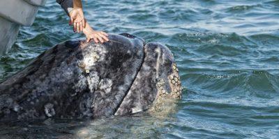 Avistamiento de ballenas Foto:Dreamstime