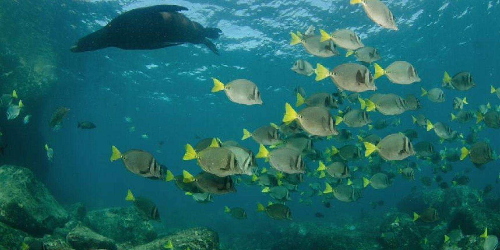 La región tiene una gran variedad de especies marinas. Foto:Dreamstime