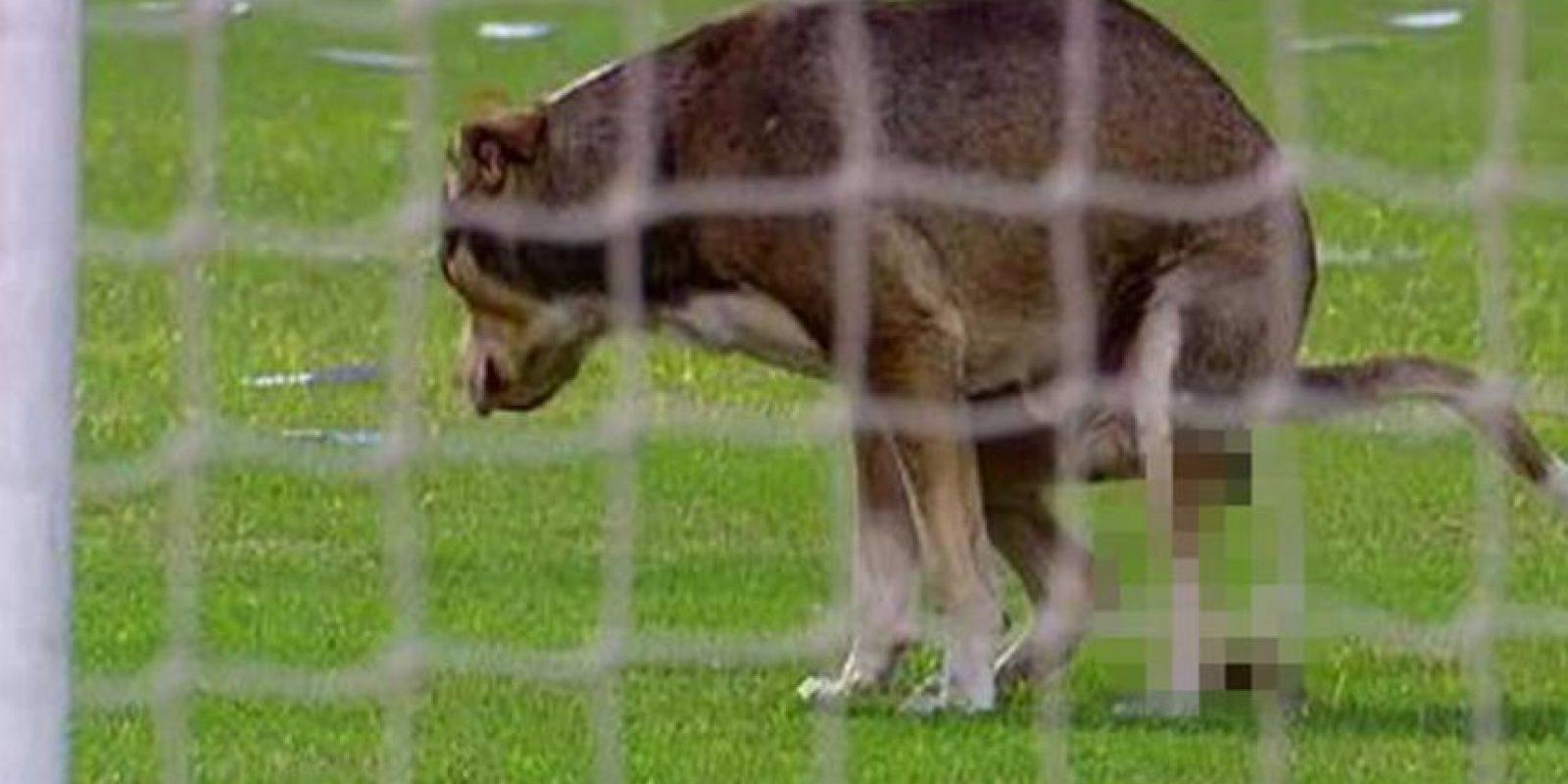 10. Pero en 2014, este perro fue más allá de invadir de la cancha. Foto:Vía twitter.com