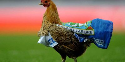 9. Un gallo con los colores del Blackburn Rovers se metió al césped durante un duelo entre este club y el Wigan. Foto: Getty Images