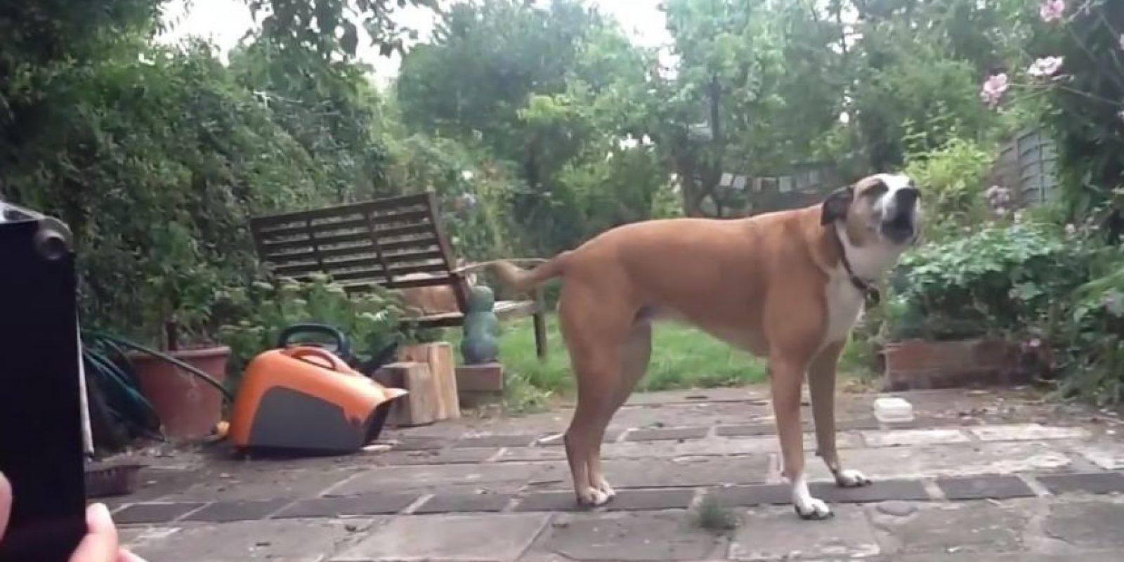 Los siguientes perros disfrazados seguramente les robarán el corazón. Foto:Vía Youtube/Ollie Hall