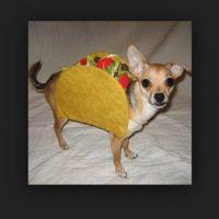 Perro taco Foto:Vía Tumblr