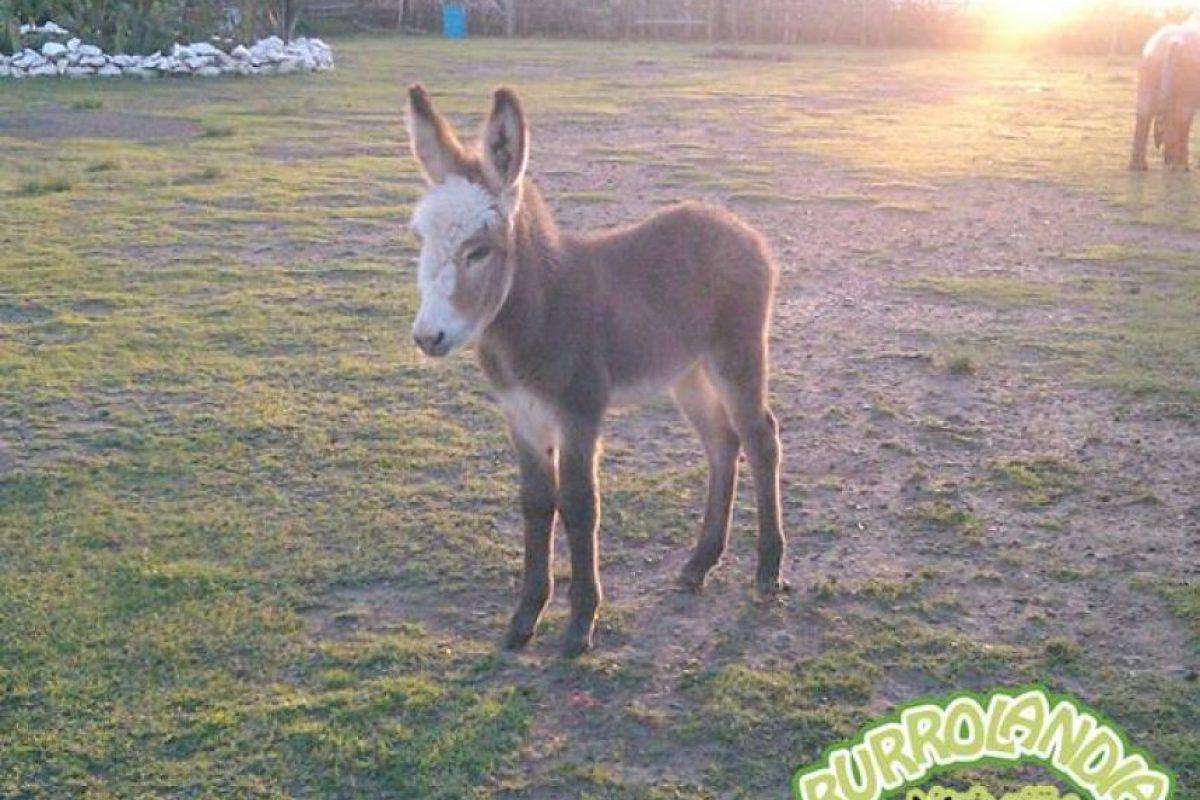 www.facebook.com/burrolandia.mexico Foto:www.facebook.com/burrolandia.mexico