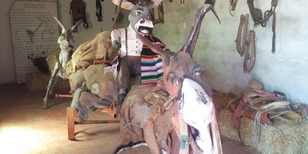 Burrolandia, un lugar en México que te hará revalorar a los burros