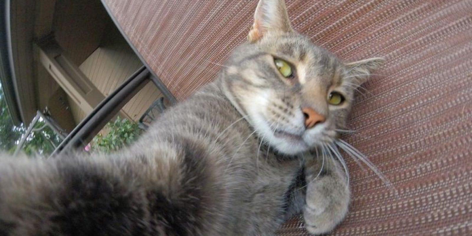 """Esta gato llamado Many es un """"amante"""" de los selfies, mismos que comparte en Instagram. Foto:instagram.com/yoremahm"""