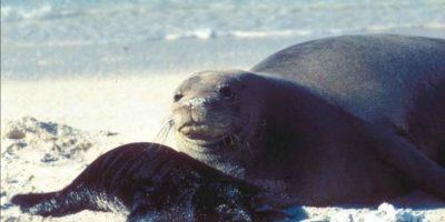 Son cuidadosamente monitoreados por la NOAA Foto:commons.wikimedia.org