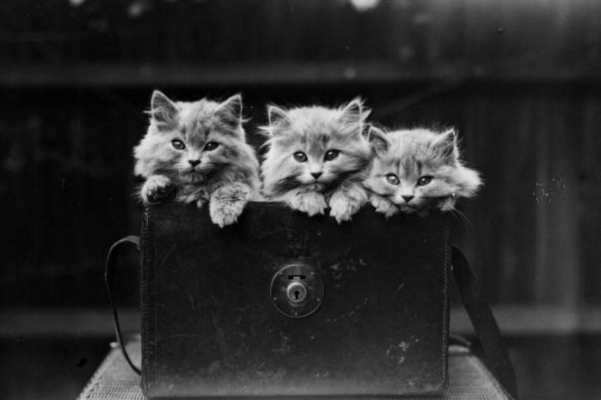 Consejos para cuidar de un gatito Foto:Getty Images