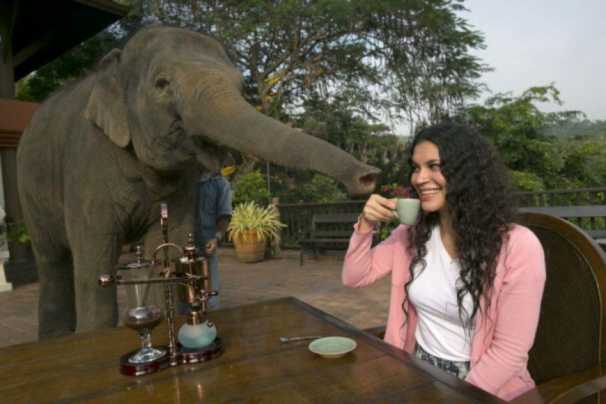 Cada oreja de elefante es única como las huellas dactilares en los humanos Foto:Getty Images