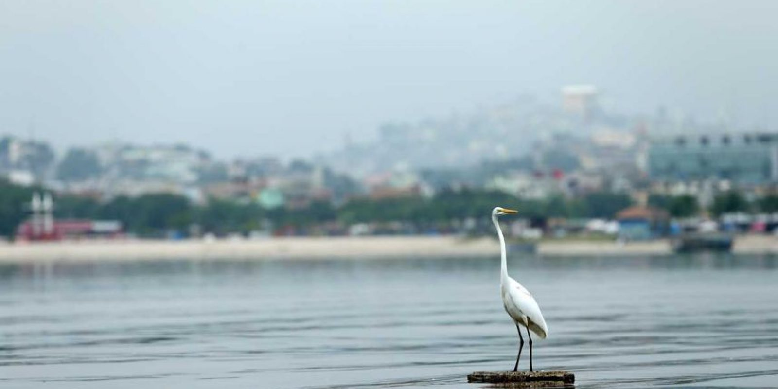 Las aguas de Rio tienen un nivel de contaminación de 1.7 millones de veces más que en Estados Unidos y Europa, lo que es perjudicial para los atletas que competirán en vela, remo y triatlón. Foto:Getty Images