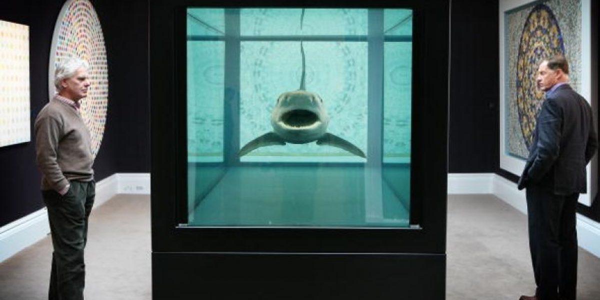 Drone capta a tiburón intentando huir de cuatro feroces ballenas