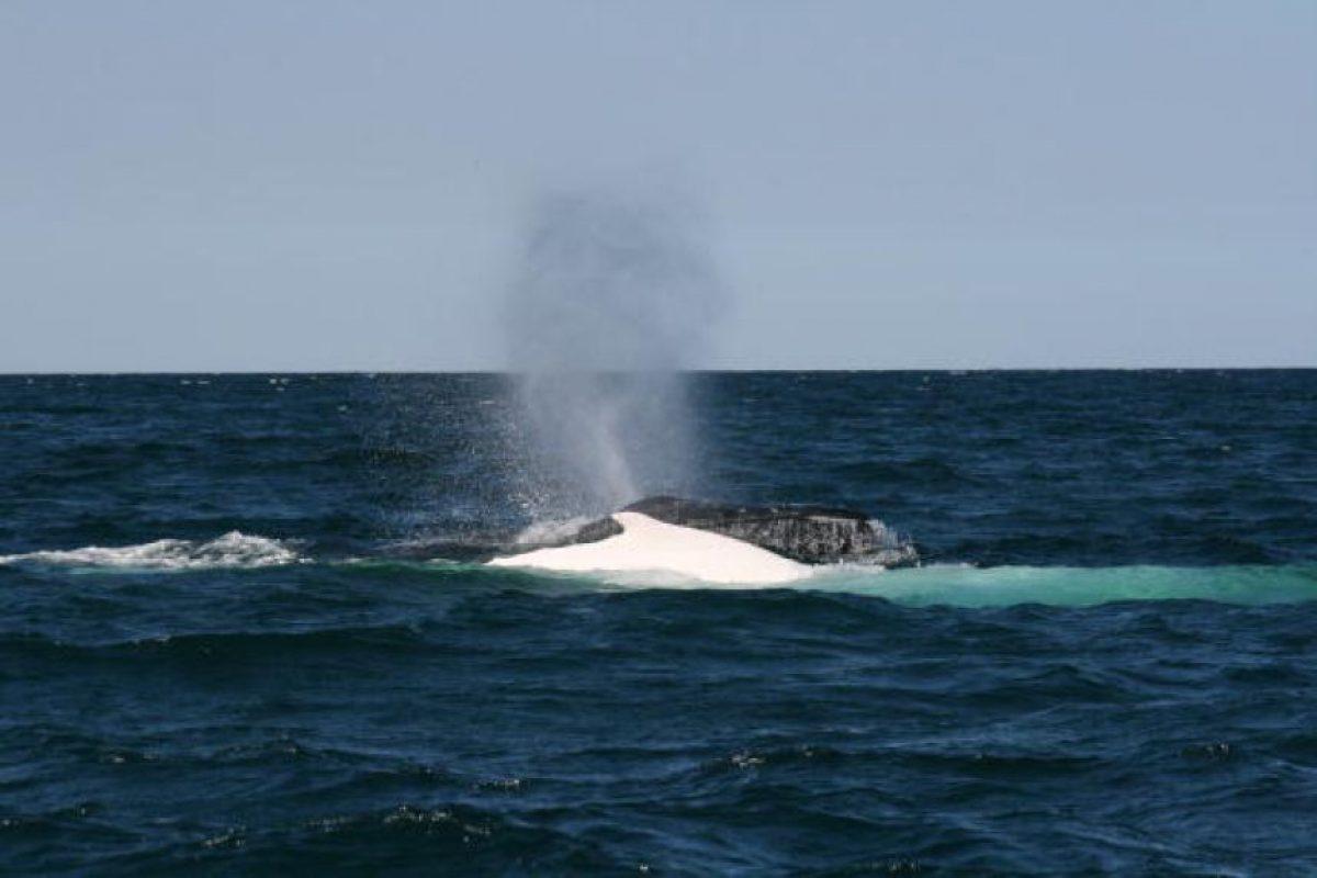 Su cola esta dispuesta horizontalmente, al contrario de muchos peces Foto:Getty Images