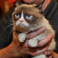 """""""Creo que los videos de gatos llegaron para quedarse"""", afirmó la investigadora Gall Myrick al periódico español """"El País"""". Foto:Getty Images"""