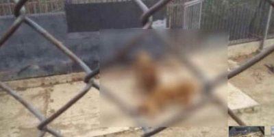 ¿De quién piensan qué es la responsabilidad de este acto, de los encargados del zoológico o del hombre suicida? Foto:Twitter/@SkaPanxo