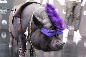 La Chata Pig también se disfrazó de Bebop Foto:Twitter