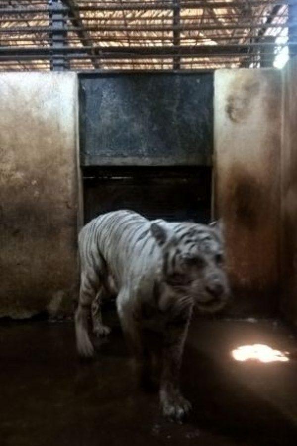 AnimaNaturalis denuncia que no es la primera vez que el Yumká enfrenta escándalos de este tipo. Las muertes de animales en sus instalaciones van en aumento. Foto:Profepa