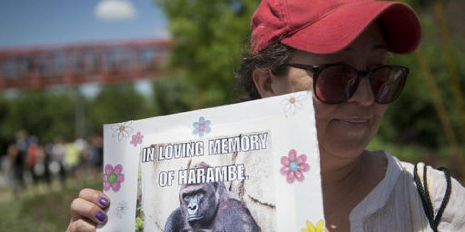 Miles recuerdan al gorila asesinado en Cincinnati Foto:AP