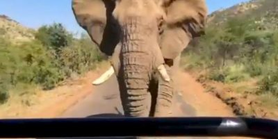 El elefante no se dio por vencido y terminó persiguiendo al actor y sus acompañantes. Foto:Instagram / Schwarzenegger