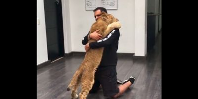 Eduardo Serio dirige la Fundación Black Jaguar White Tiger para rescatar felinos salvajes. Foto:Black Jaguar White Tiger Foundation