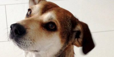 Los adoptantes deben comprometerse a cuidarlos. Foto:vía Reddit