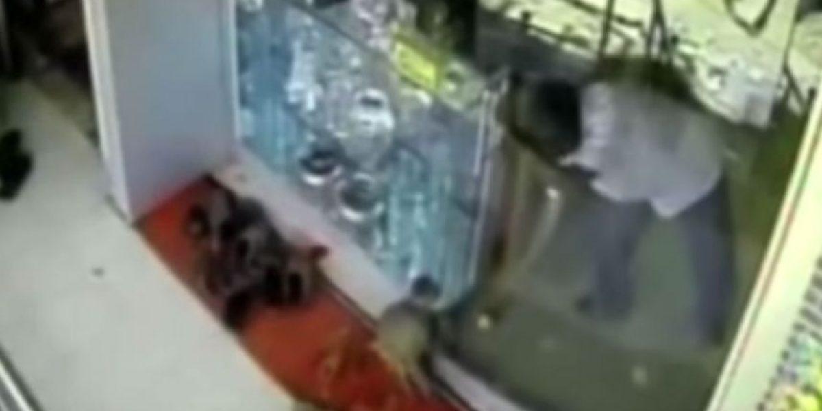 Este mono robó una joyería engañando al encargado