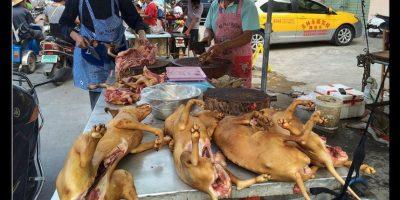 El 21 de junio da inicio el Festival de Carne de Perro de Yulin, al sur de China. Foto:AP