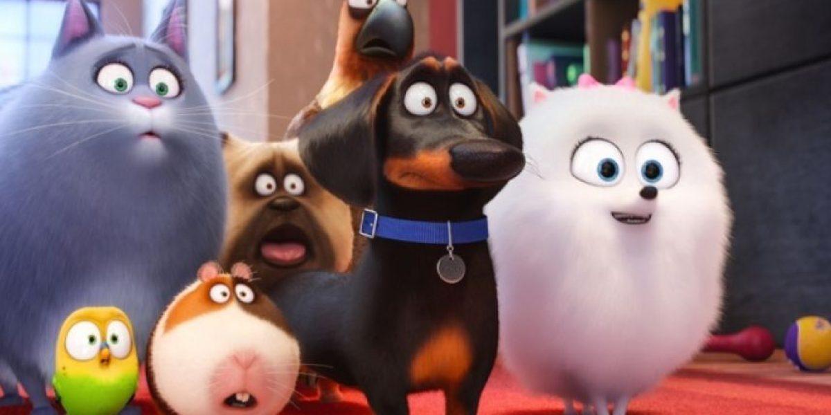 "Llega nuevo trailer de ""La vida secreta de las mascotas"""