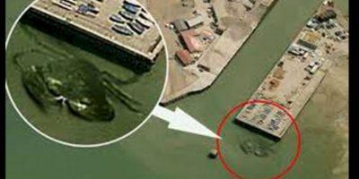 No es el primer animal gigante por Google Maps, este cangrejo gigante también causó revuelo anteriormente. Foto:Reproducción Google Maps
