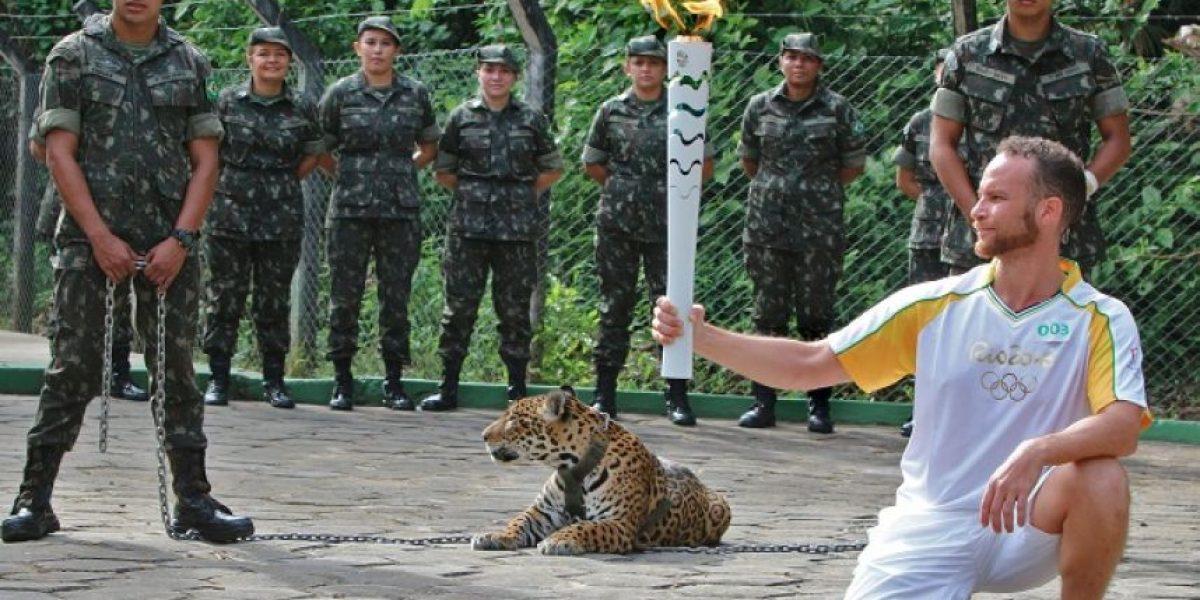 Matan a jaguar en evento con la antorcha olímpica de Río