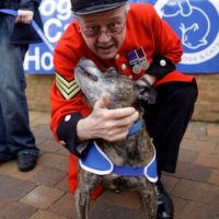 También recomiendan identificar las señales del lenguaje canino Foto:Getty Images