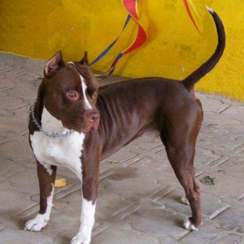 Los perros serán sacrificados Foto:Wikimedia