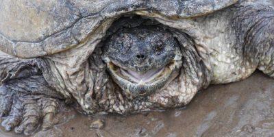 Tenía fracturas en el cráneo y perdió la vista de un ojo Foto:Vía Facebook.com/The-Tuttle-Turtle