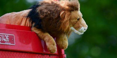 Inglaterra ubicó al peluche bautizado como 'Leo' en la banca, pero no les resultó la cábala Foto:Getty Images