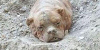 Un hombre enterró a esta perrita de 11 años en Francia el año pasado. Foto:vía Facebook