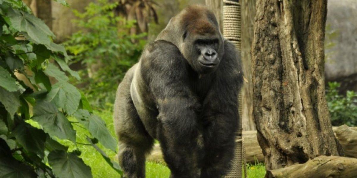 Buscarán cerrar el Zoológico de Chapultepec tras la muerte de Bantú