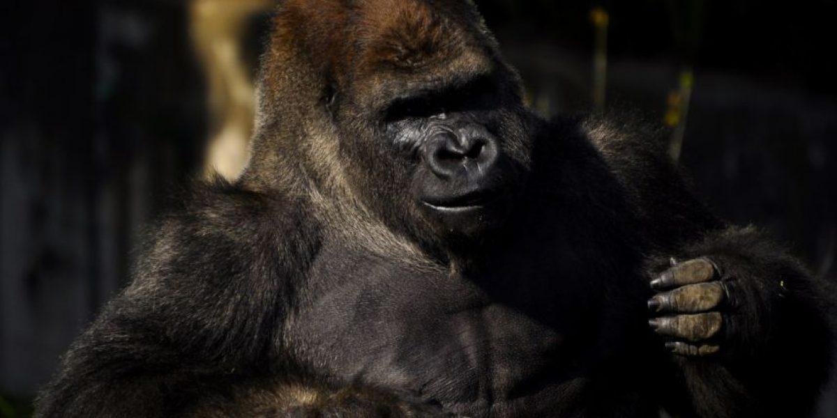 CDMX descarta cierre de Zoológico tras muerte de Bantú