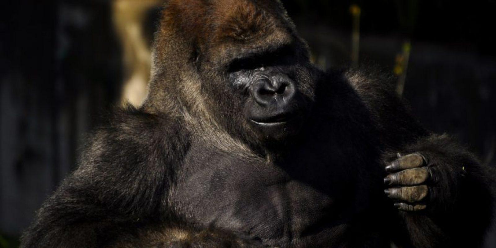 Nació el 20 de septiembre de 1991 en el Zoológico de Chapultepec. Foto:Cuartoscuro
