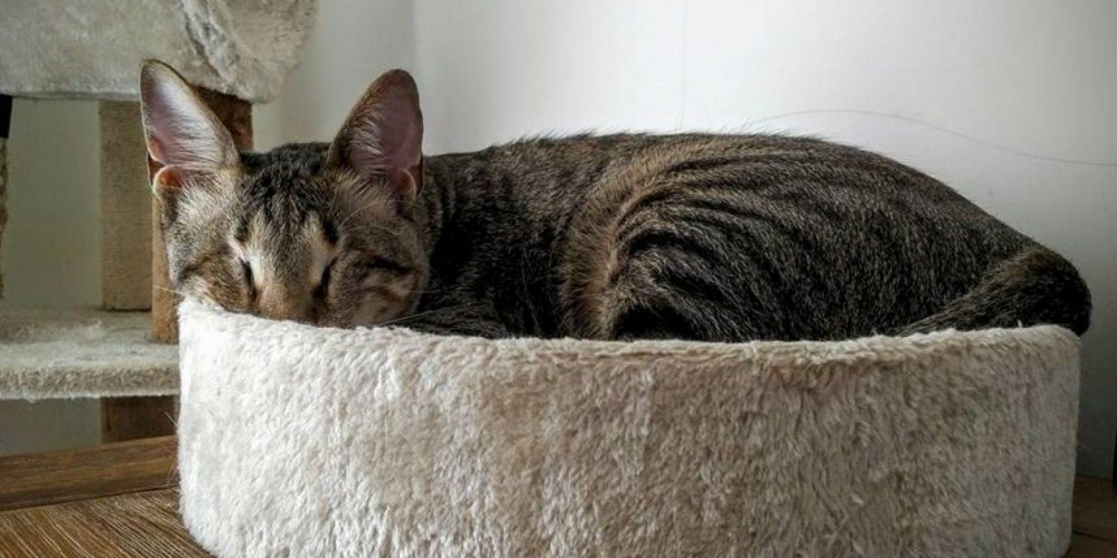 """""""Mirén quién se está 'escondiendo' porque fue sorprendido jugando con el vabello de mami otra vez"""". Foto:Facebook Three Blind Cats"""