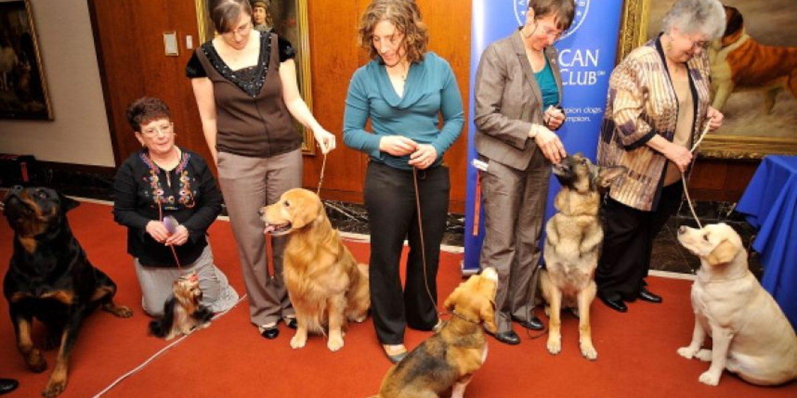 Tampoco se recomienda golpear al perro, ya que es posible irritarlo más Foto:Getty Images