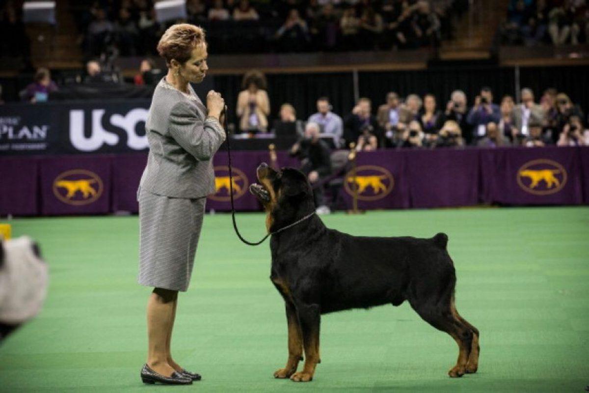 No es conveniente jalar a la víctima para que el perro la suelte, eso no suele ocurrir y pueden producirse desgarros en la persona atacada. Foto:Getty Images