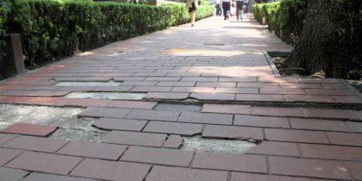 Árboles han dañado las banquetas de esta avenida Foto:Nicolás Corte / Publimetro