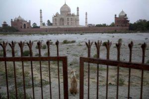 Sucedió en la India, donde activistas piden mayores penas contra los abusadores de animales Foto:Getty Images