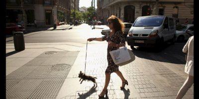 Además de imponer multas, impuestos y penas de cárcel a quienes abandonen a sus mascotas. Foto:Getty Images