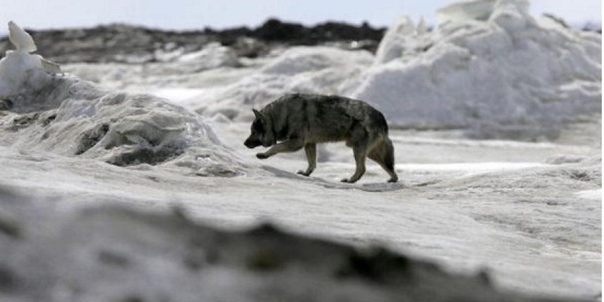 Fotografía de la disminución del hielo marino en el Océano Ártico