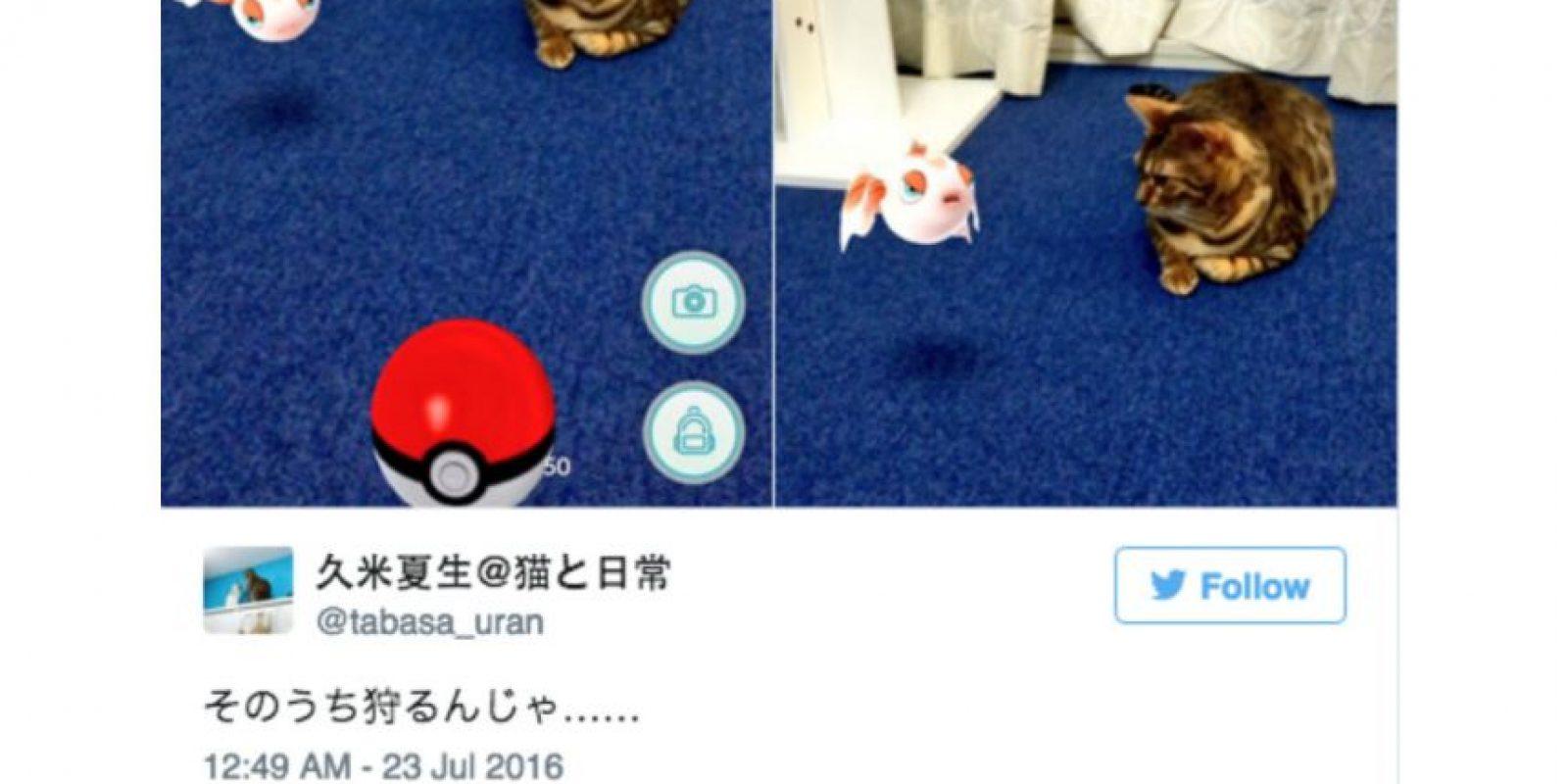 Estaban tratando de capturar pokémon que sólo salen en la noche. Foto:Twitter