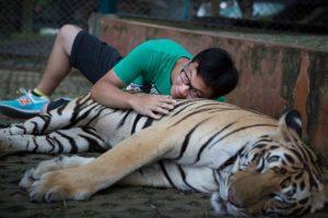 Son una especie en peligro de extinción Foto:Getty Images