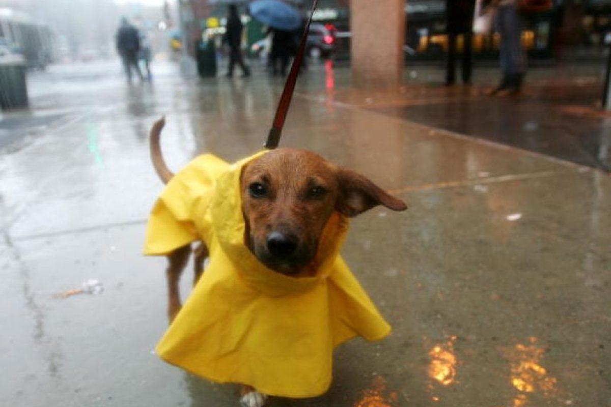 5 formas para contribuir a evitar el maltrato animal Foto:Getty Images